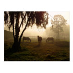Horses on a Misty Morning Post Card