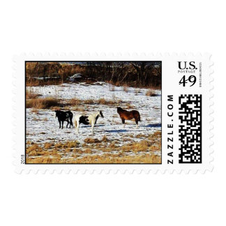 Horses on a pasture postage