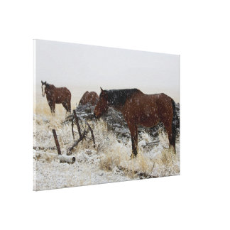 Horses on A Snowy Day - by old cart and fence post Canvas Print