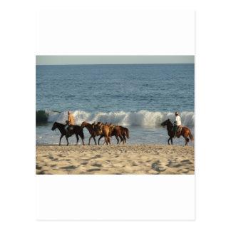 Horses on Beach Postcard