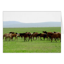 Horses on Pasture - Landscape Photograph