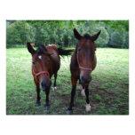 Horses on pasture letterhead template