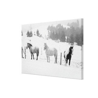Horses on ranch gallery wrapped canvas