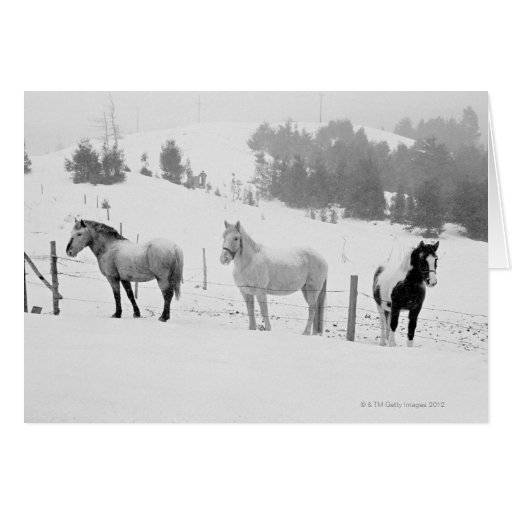 Horses on ranch greeting card