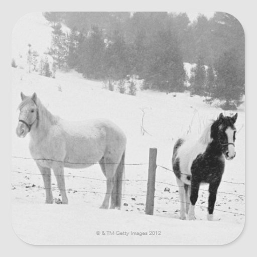 Horses on ranch square sticker