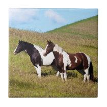 Horses on the hillside tile
