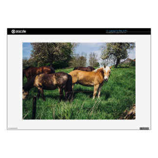 Horses Ponies In Spring Pasture Decals For Laptops