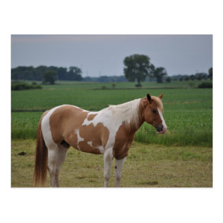Horses Post Cards