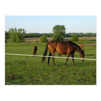 Horses Postcard Post Card