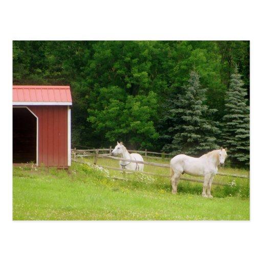 Horses Postcards
