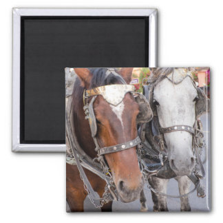 Horses Pull a Carriage Magnet
