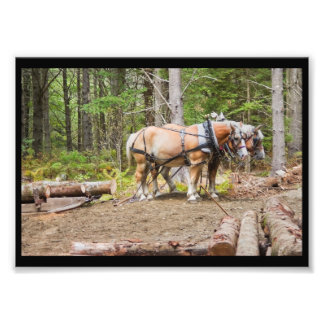 Horses Pulling Logs In Woods of Maine Photo