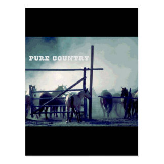 Horses Pure Country Postcard