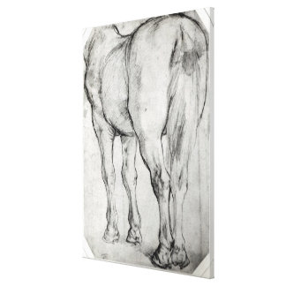 Horse's Rear Canvas Print