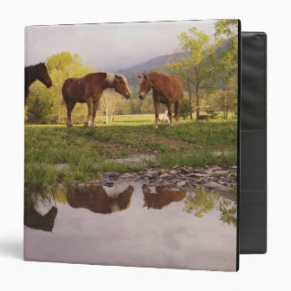 Horses reflected in small stream, Cades Cove, 3 Ring Binder