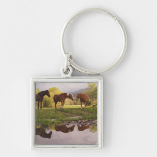 Horses reflected in small stream, Cades Cove, Silver-Colored Square Keychain