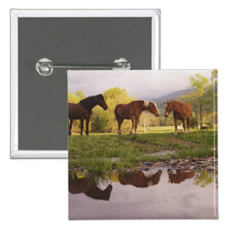 Horses reflected in small stream, Cades Cove, Pinback Button