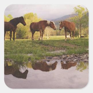 Horses reflected in small stream, Cades Cove, Square Sticker