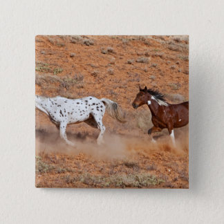 Horses roaming the Big Horn MT of Shell Wyoming. 2 Button