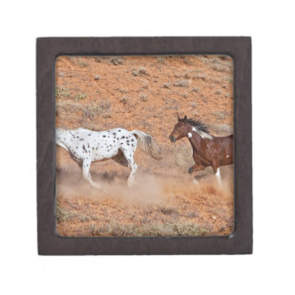 Horses roaming the Big Horn MT of Shell Wyoming. 2 Premium Gift Boxes
