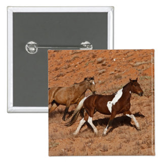 Horses roaming the Big Horn MT of Shell Wyoming. Pins
