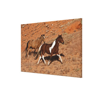 Horses roaming the Big Horn MT of Shell Wyoming. Canvas Print