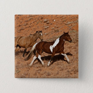 Horses roaming the Big Horn MT of Shell Wyoming. Pinback Button