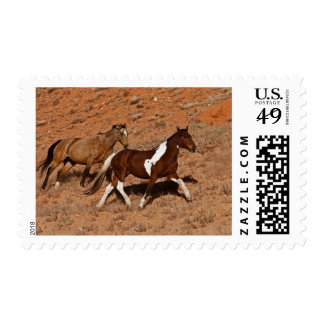 Horses roaming the Big Horn MT of Shell Wyoming. Postage