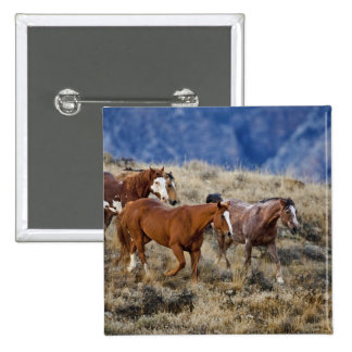Horses roaming the scenic hills of the Big Horn 2 Pinback Button