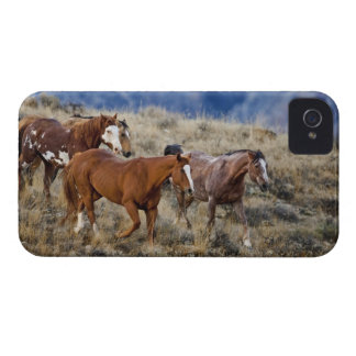 Horses roaming the scenic hills of the Big Horn 2 iPhone 4 Covers