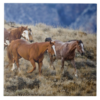 Horses roaming the scenic hills of the Big Horn 2 Large Square Tile