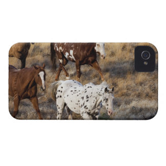 Horses roaming the scenic hills of the Big Horn Case-Mate iPhone 4 Cases