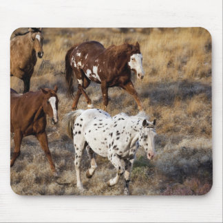 Horses roaming the scenic hills of the Big Horn Mouse Pad