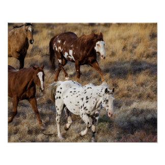 Horses roaming the scenic hills of the Big Horn Poster