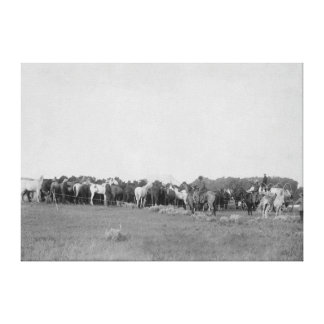Horses Rounded up by Cowboys Photograph Canvas Print