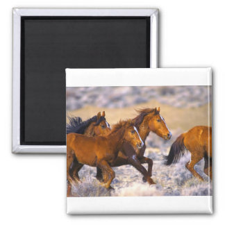 Horses running 2 inch square magnet