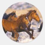 Horses running classic round sticker