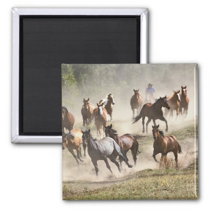 Horses running during roundup, Montana 2 Inch Square Magnet
