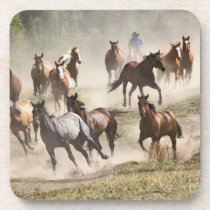 Horses running during roundup, Montana Beverage Coaster