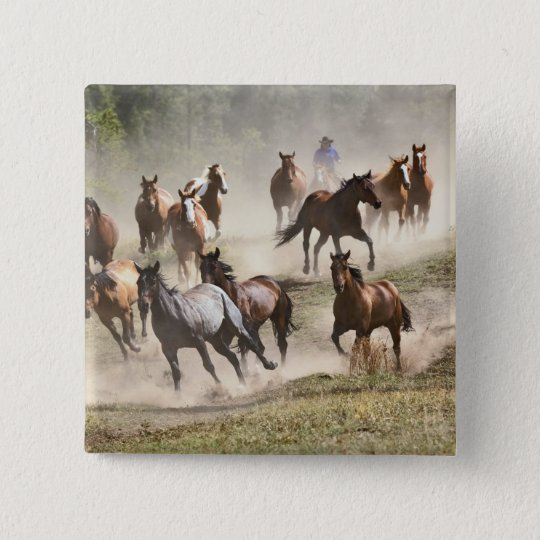 Horses running during roundup, Montana Button