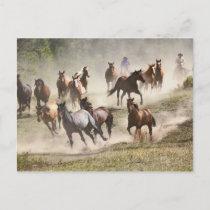 Horses running during roundup, Montana Postcard