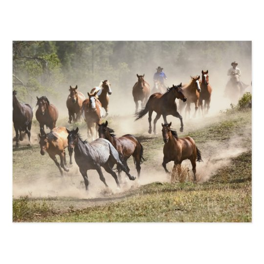 Horses running during roundup, Montana Postcard