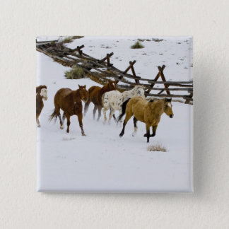 Horses Running in Snow Pinback Button