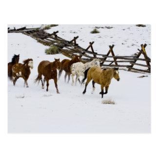 Horses Running in Snow Postcards