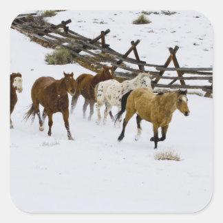 Horses Running in Snow Square Sticker