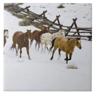 Horses Running in Snow Tile