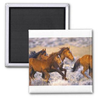 Horses running 2 inch square magnet