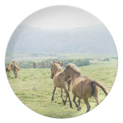 Horses running plate