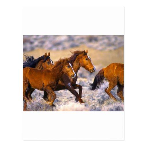 Horses running postcards