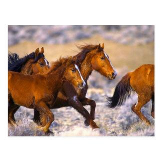 Horses running postcard